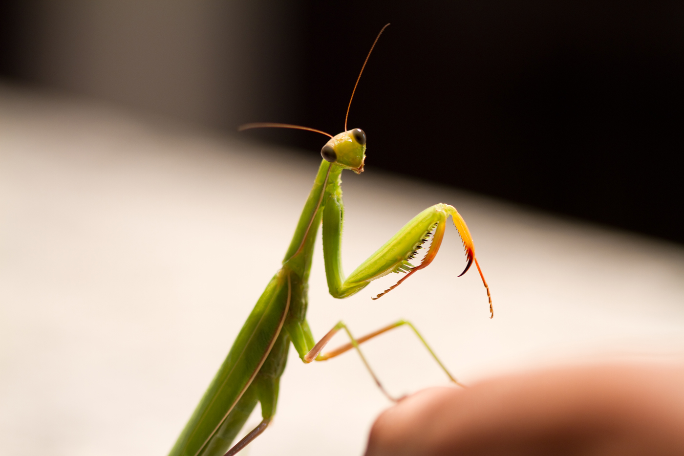 Image result for praying mantis cute