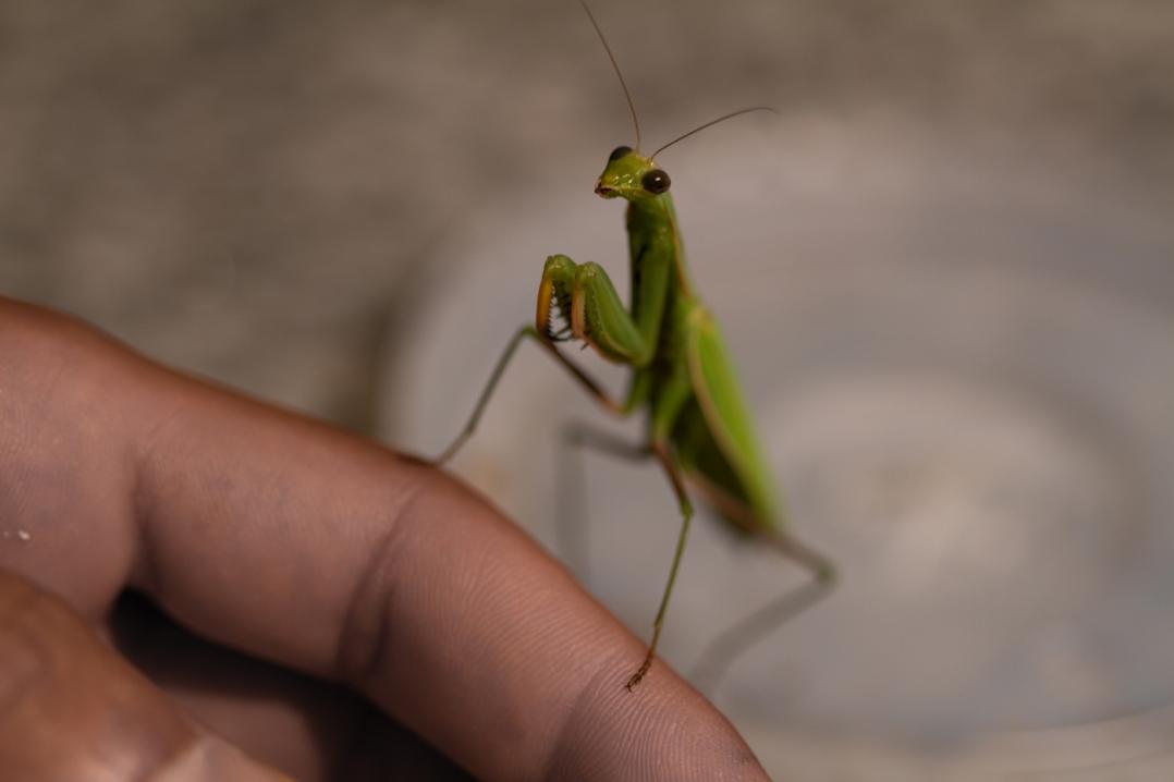 entomological