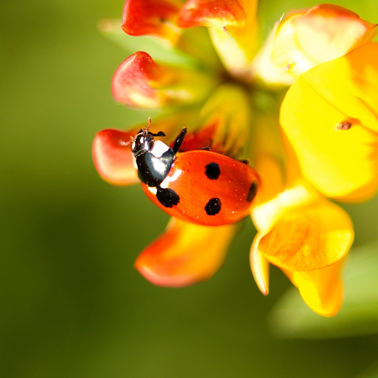 macro photography tips