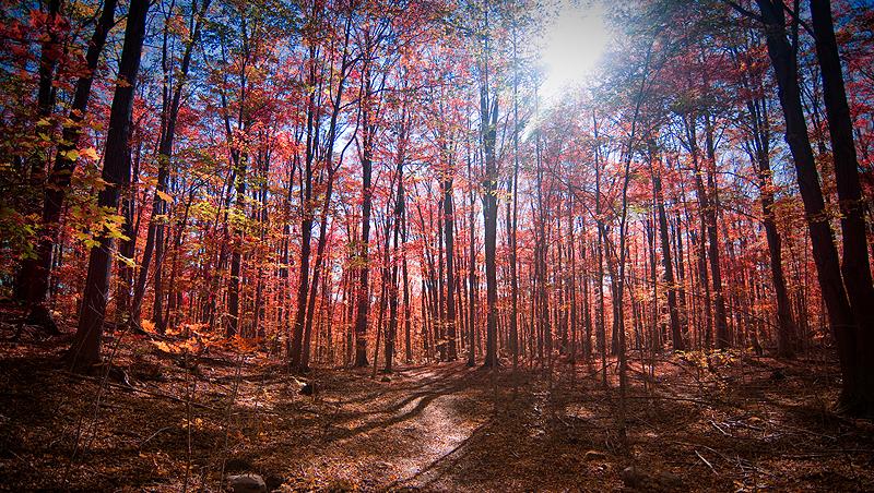 Terra Cotta Reserve, Ontario