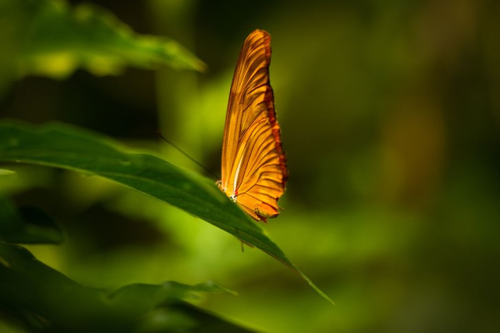 Victoria Butterfly Gardens ©Shireen Nadir 2012