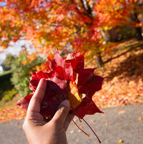 autumn leaves ©Shireen Nadir 2012