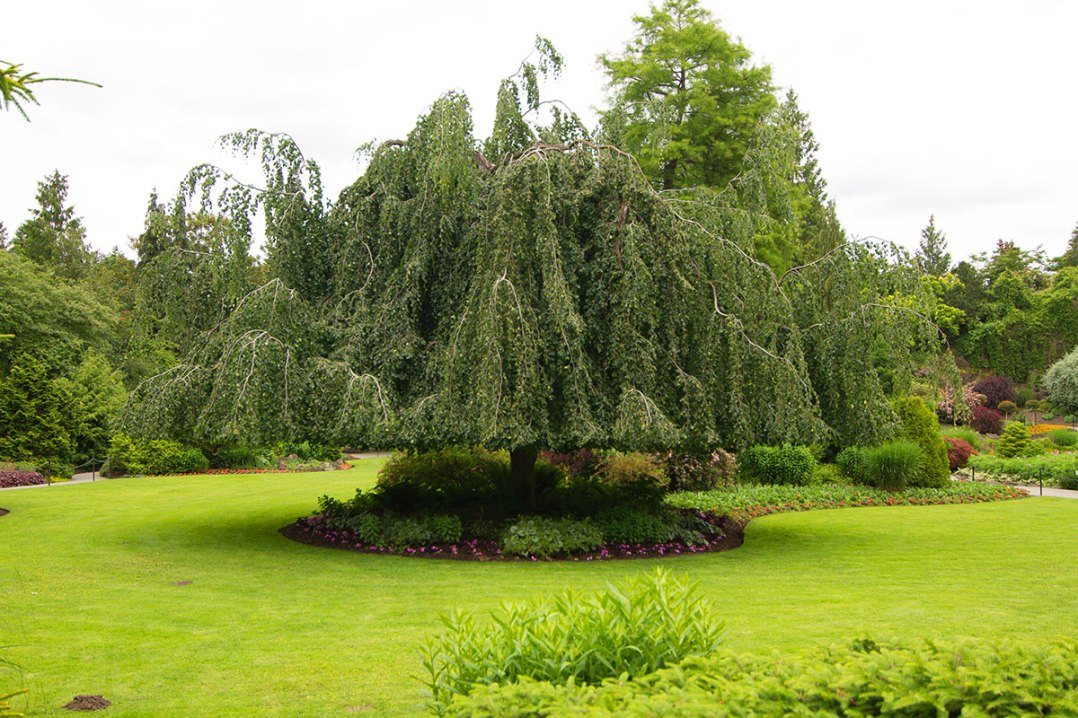 Queen Elizabeth Gardens, ©Shireen Nadir 2012