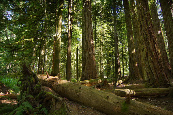 Cathedral Grove ©Shireen Nadir 2013