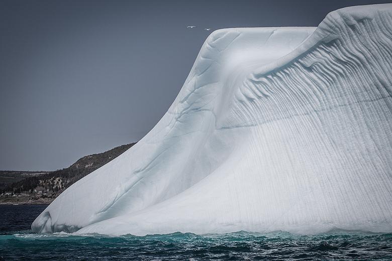 Icebergs in Newfoundland ©Shireen Nadir 2013