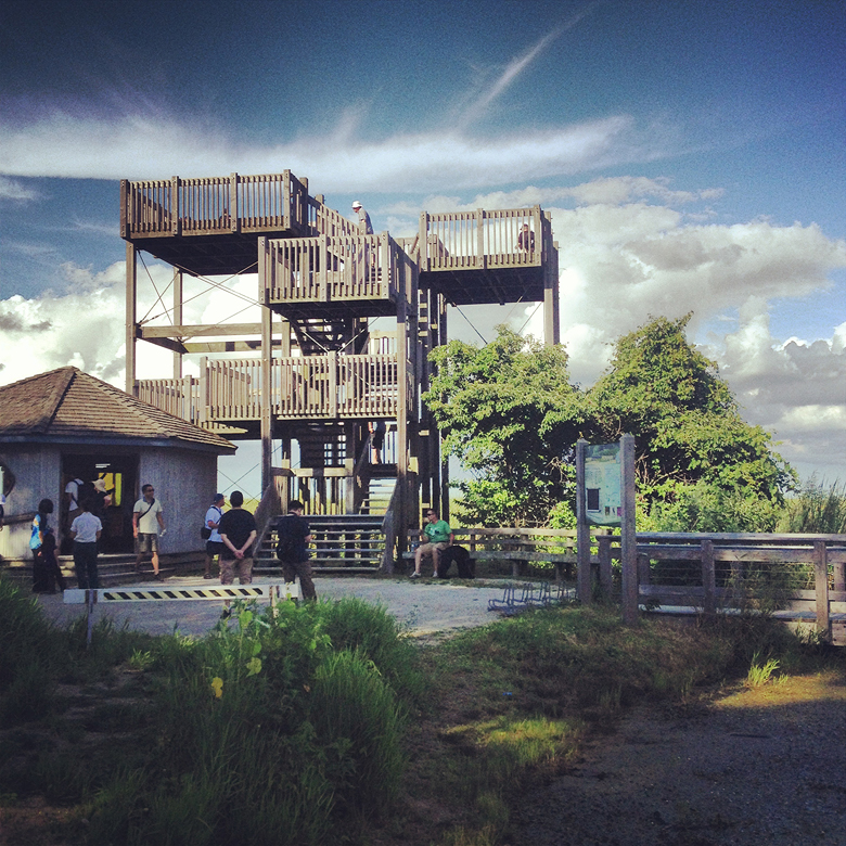 The viewing platform at the marsh.