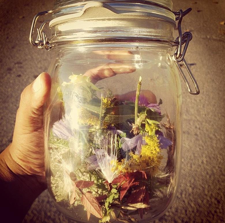 Ontario Wildflowers