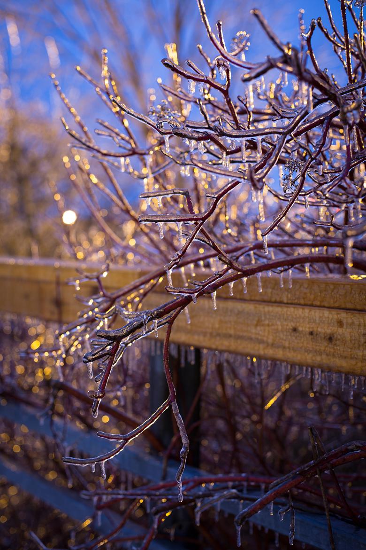 Ice Storm ©Shireen Nadir 2013