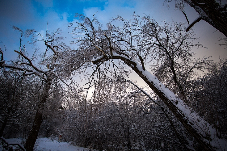 Ice Storm ©Shireen Nadir 2013