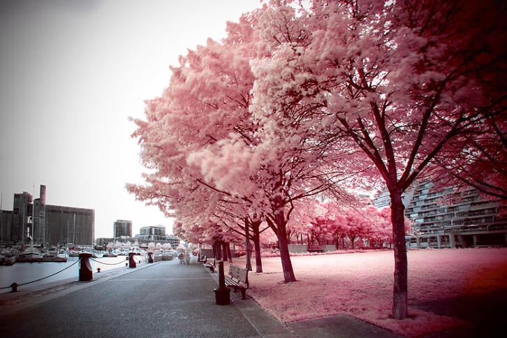Infrared Photography ©Shireen Nadir 2014