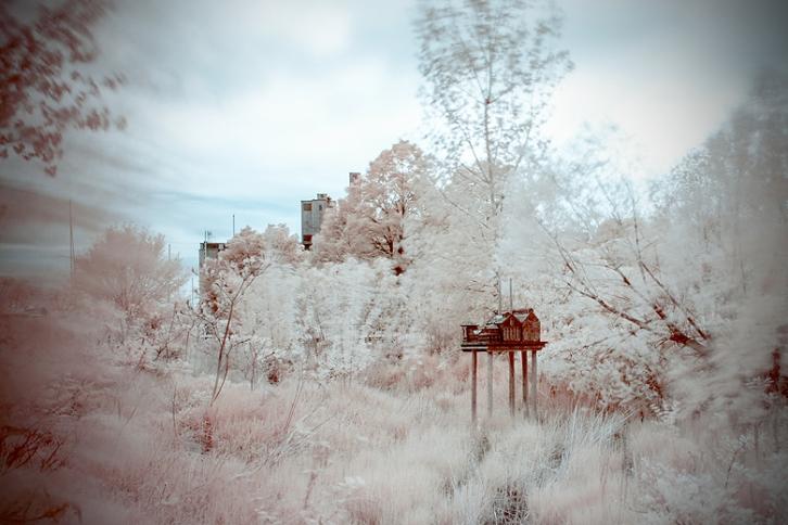 Infrared Photography ©Shireen Nadir 2014