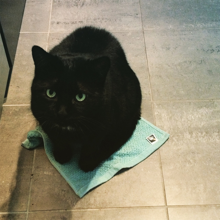 What happened to you? I'm busy occupying this tea towel...