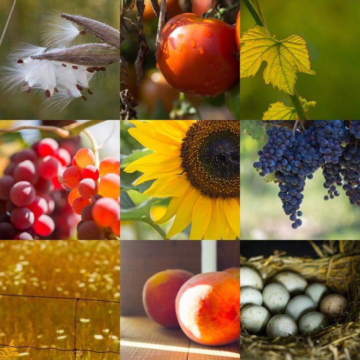 moodboard_autumn-harvest