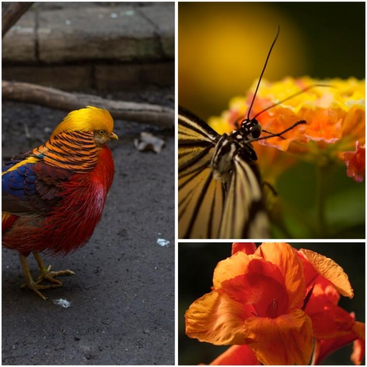 Birds&Blooms