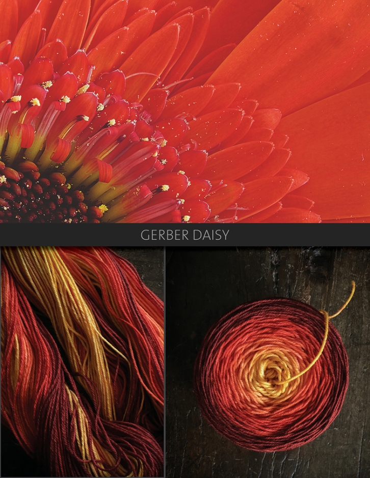 Gerber-Daisy